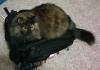 BrieBrie backpack
