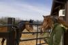 Horses and barn life