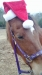 Horses in santa hats