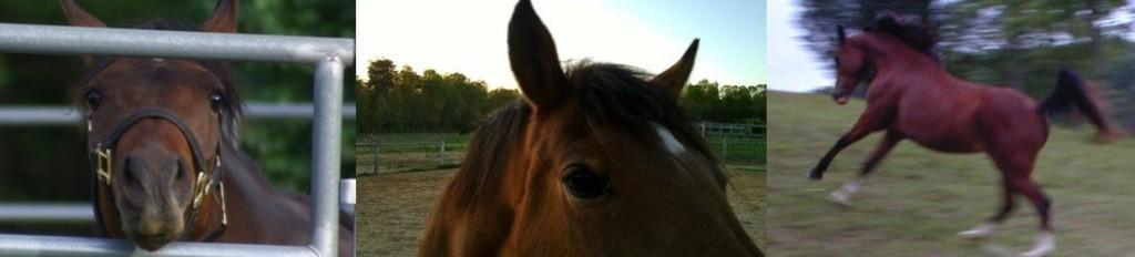 horse_banner2