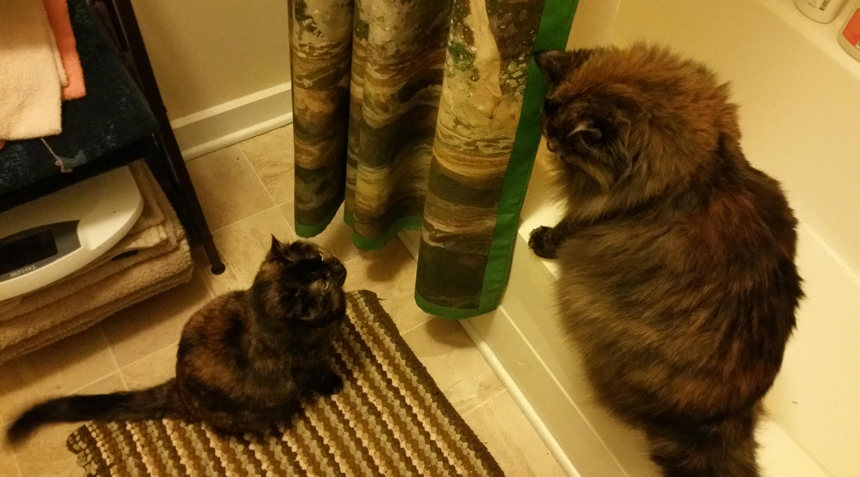 Cat Battles